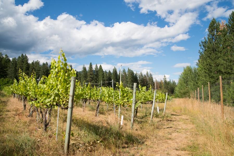 China Bend Winery