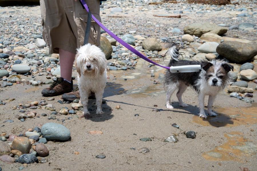 dog friendly vacation