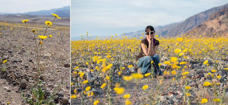 Super Bloom at Death Valley National Park