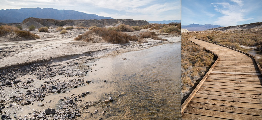 Death Valley Pupfish